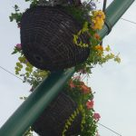 Photo of a hanging basket on a lampost taken from low level