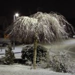 Photograph of a snowy tree