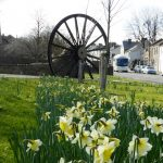 Photograph of Coxhoe pit wheel with daffodils
