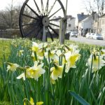 Photograph of the great Coxhoe pit wheelthrough daffs