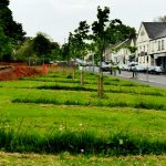 pHOTOGRAPH OF VILLAGE GREEN WITH ROWS OF BULBS