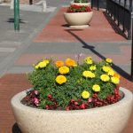Another photo of one or two planters in 2010 front street