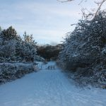 Photograph of Coxhoe Woods with snow