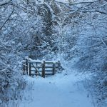 Photograph of snowy winter scene in Coxhoe woods