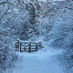 Photograph of snowy winter scene in Coxhoe woods