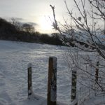 Photograph of fence and silouette at Coxhoe Woods