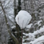 Photograph of snowball on branch