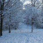 Photograph of snowy trees in Beechfield Rise