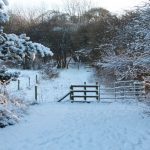 Photograph of snowy gate