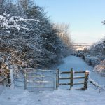 Photograph of snowy walk over Coxhoe Woods with gate in foreground