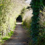 Photograph of a clean Parsons walk