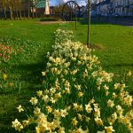 Photograph of village green flowers in spring with the pit wheel right at the back