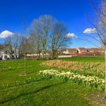 Photograph of village green flowers in spring and bright blue sky