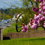 Photograph of cherry blossom and pit wheel