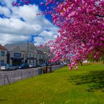 photo of co-op buildings with blossom in foreground