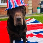 A dog with union Jack bowler