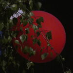 Red balloon in the dark with leaves