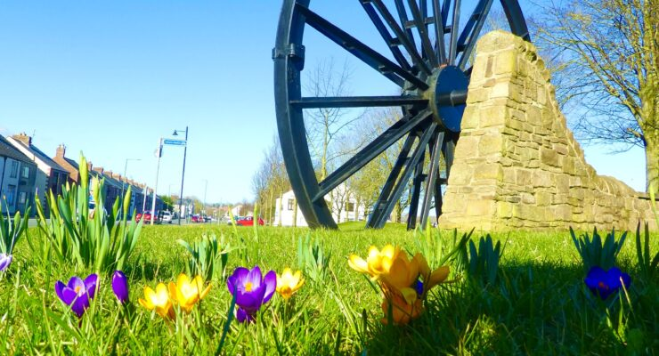 crocusses on the village green on a sunny spring morning