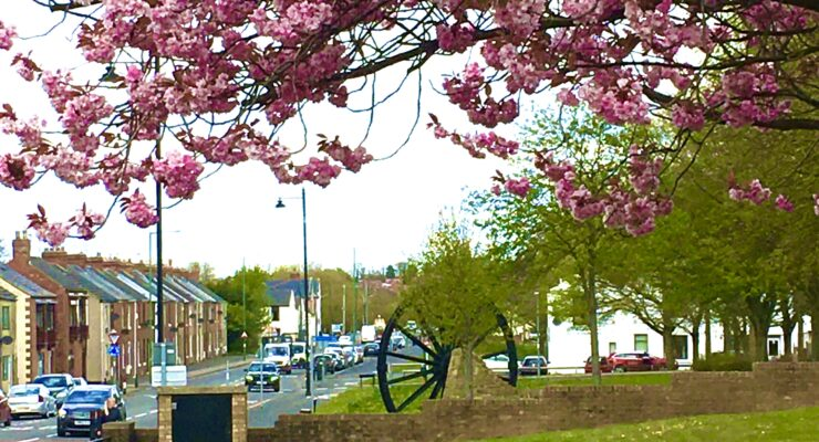 Coxhoe Village green with blossom